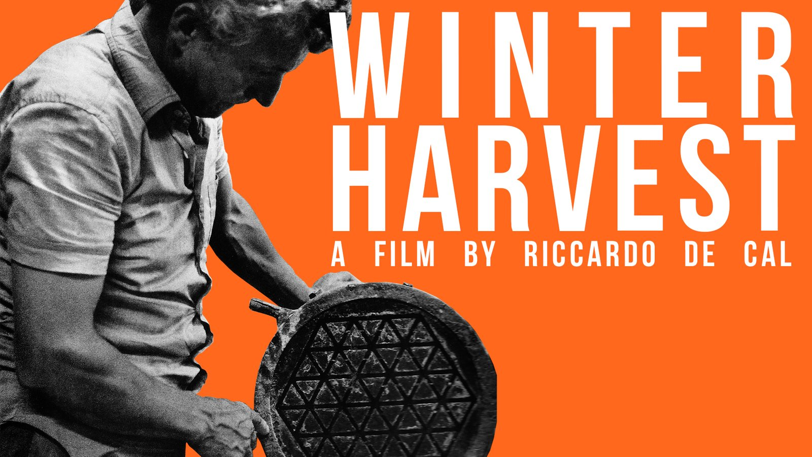 Winter Harvest - Raccolto D'inverno.