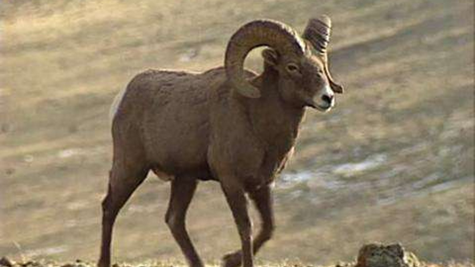 Sheep Eaters, Part 4- Hunting & Fishing