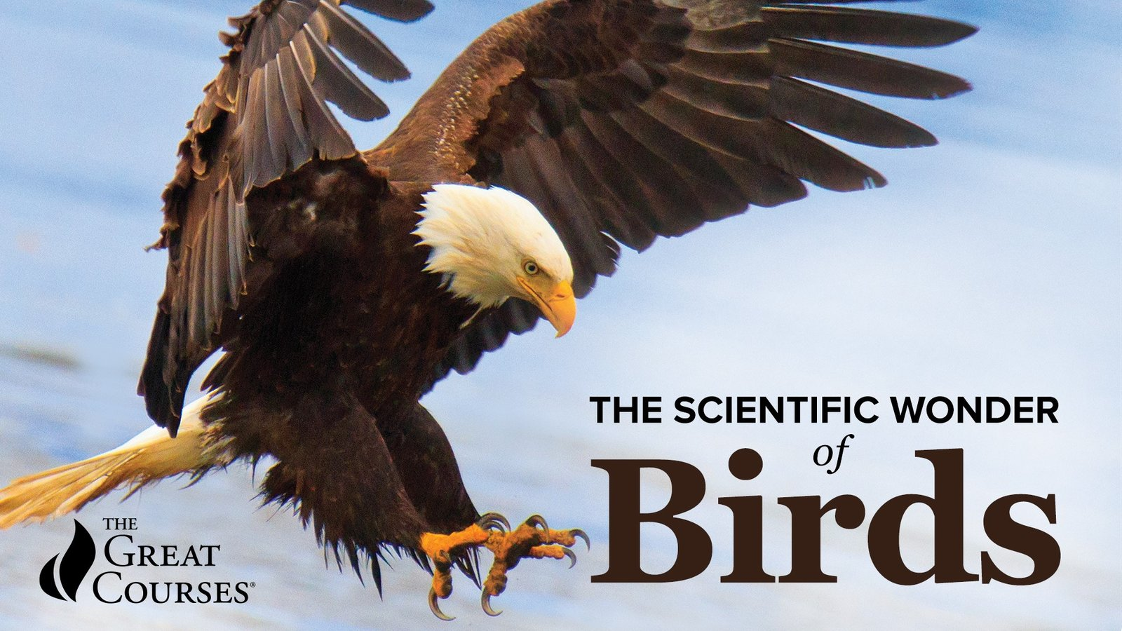 The Scientific Wonder of Birds