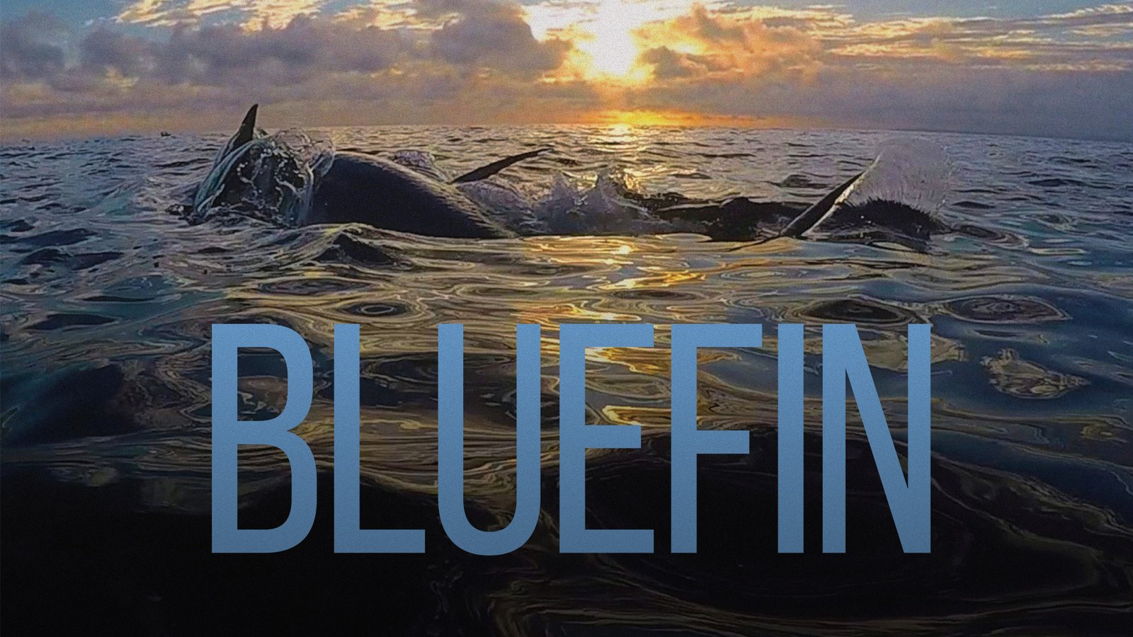 Bluefin - Investigating a Fish Phenomenon