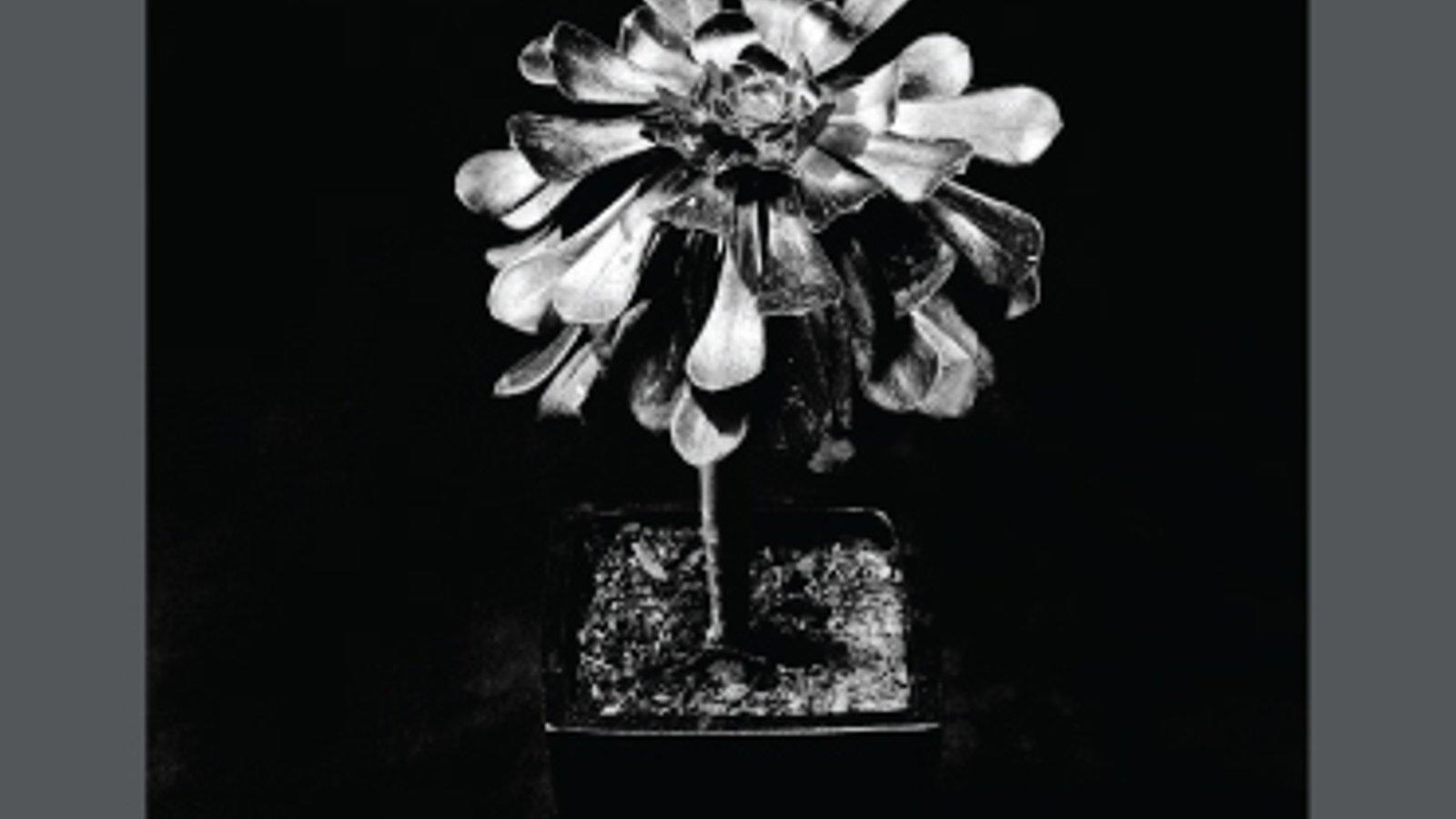 Trent Parke: The Black Rose