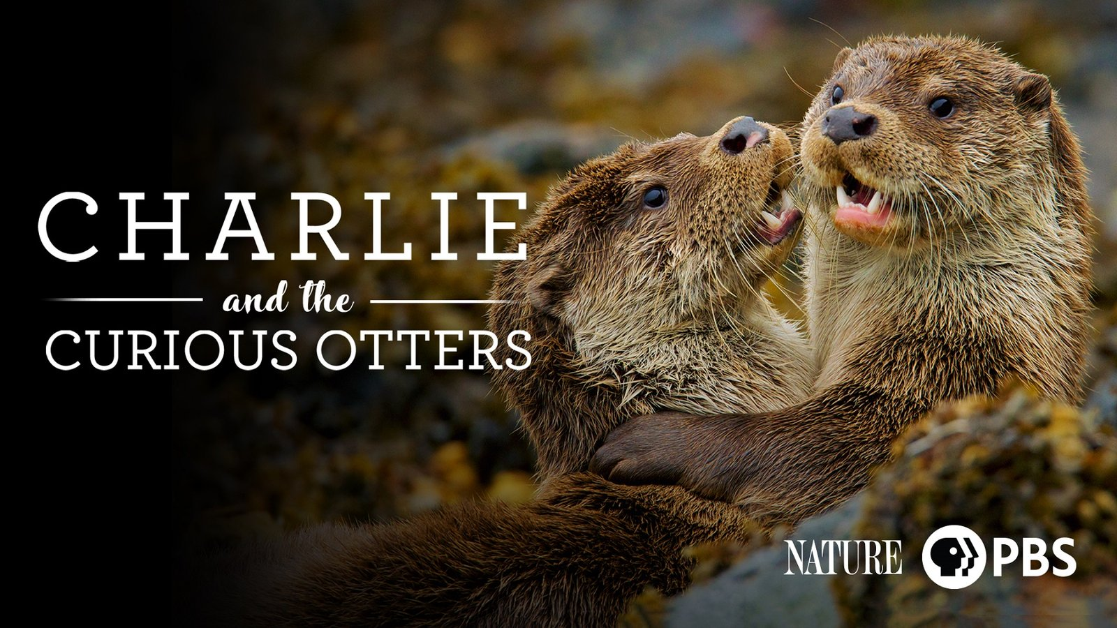 Nature: Charlie and the Curious Otters