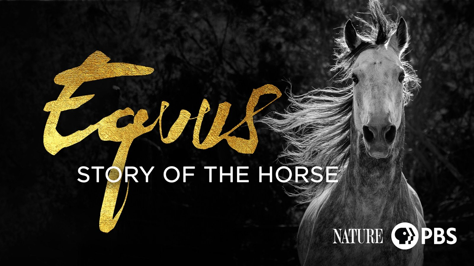 "Nature: Equus ""Story of the Horse"""
