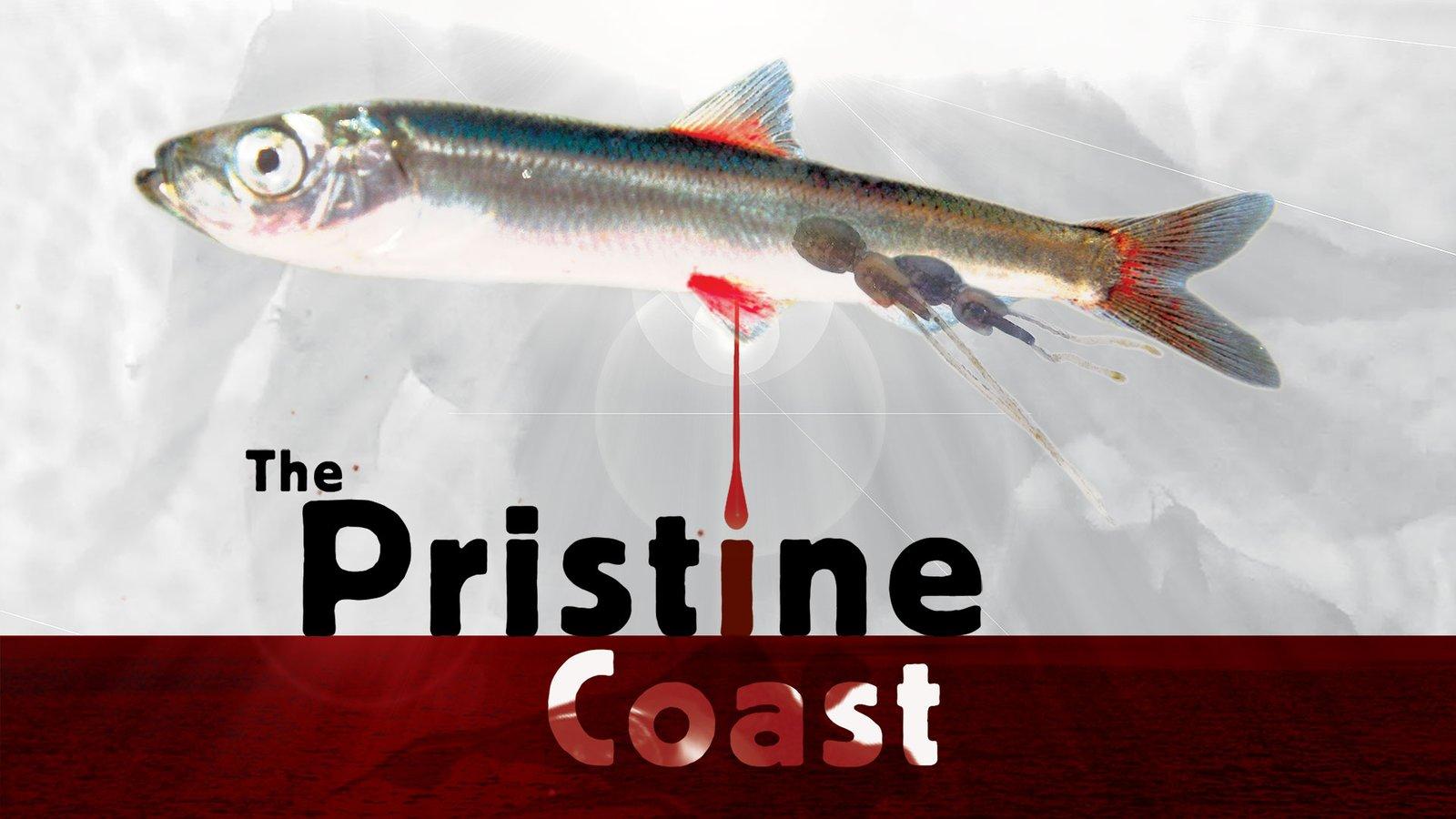 The Pristine Coast - Investigating British Columbia's Marine Ecosystem