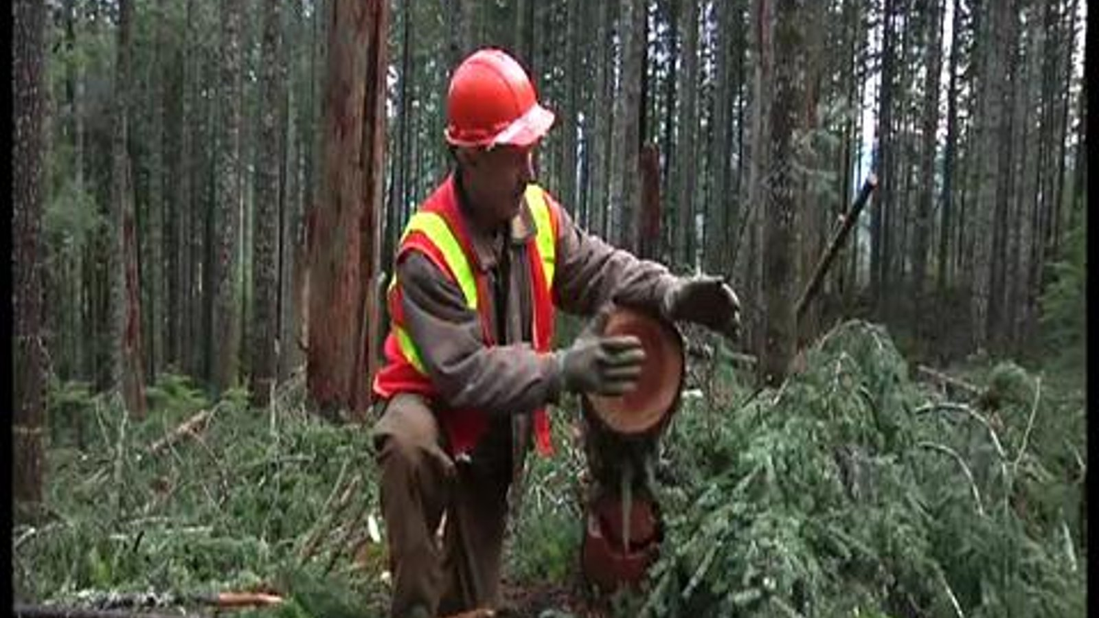 The Green Economy: Sustainable Forestry