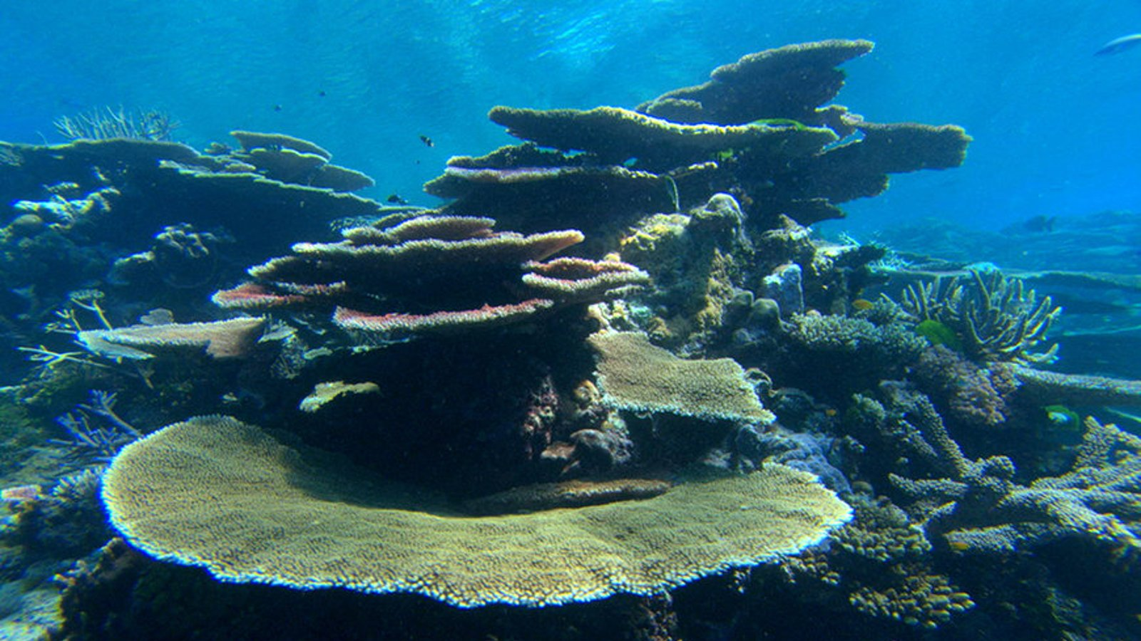 Climate Change - Coral Reefs on Edge
