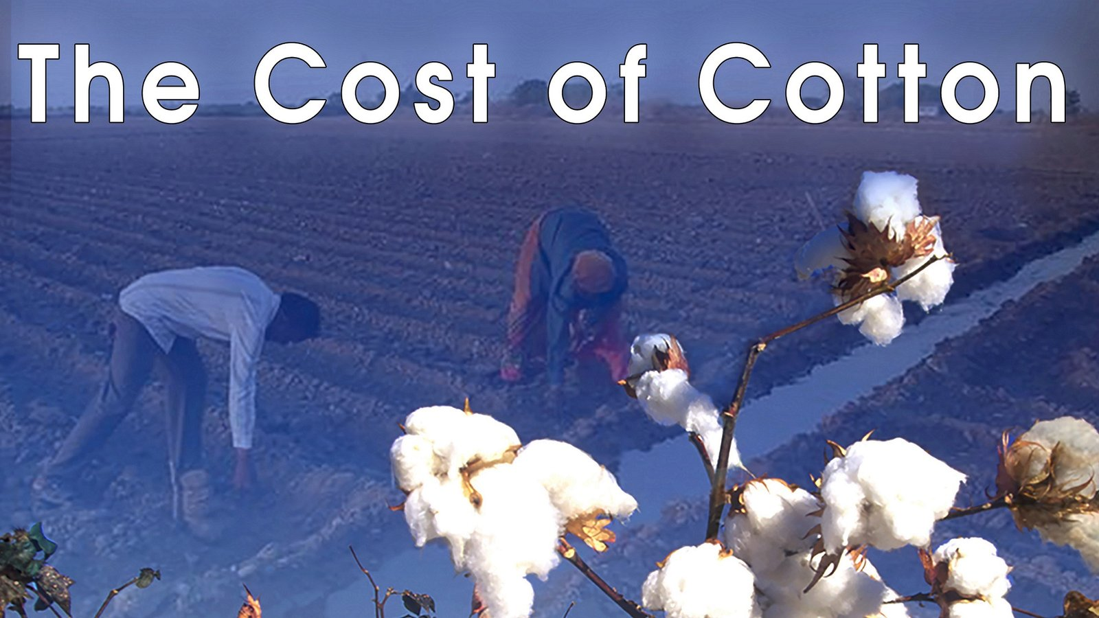 The Cost of Cotton - Questions of Ethics in the Cotton Production Chain