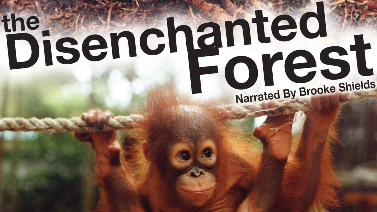 Disenchanted Forest - Great Apes in Asia