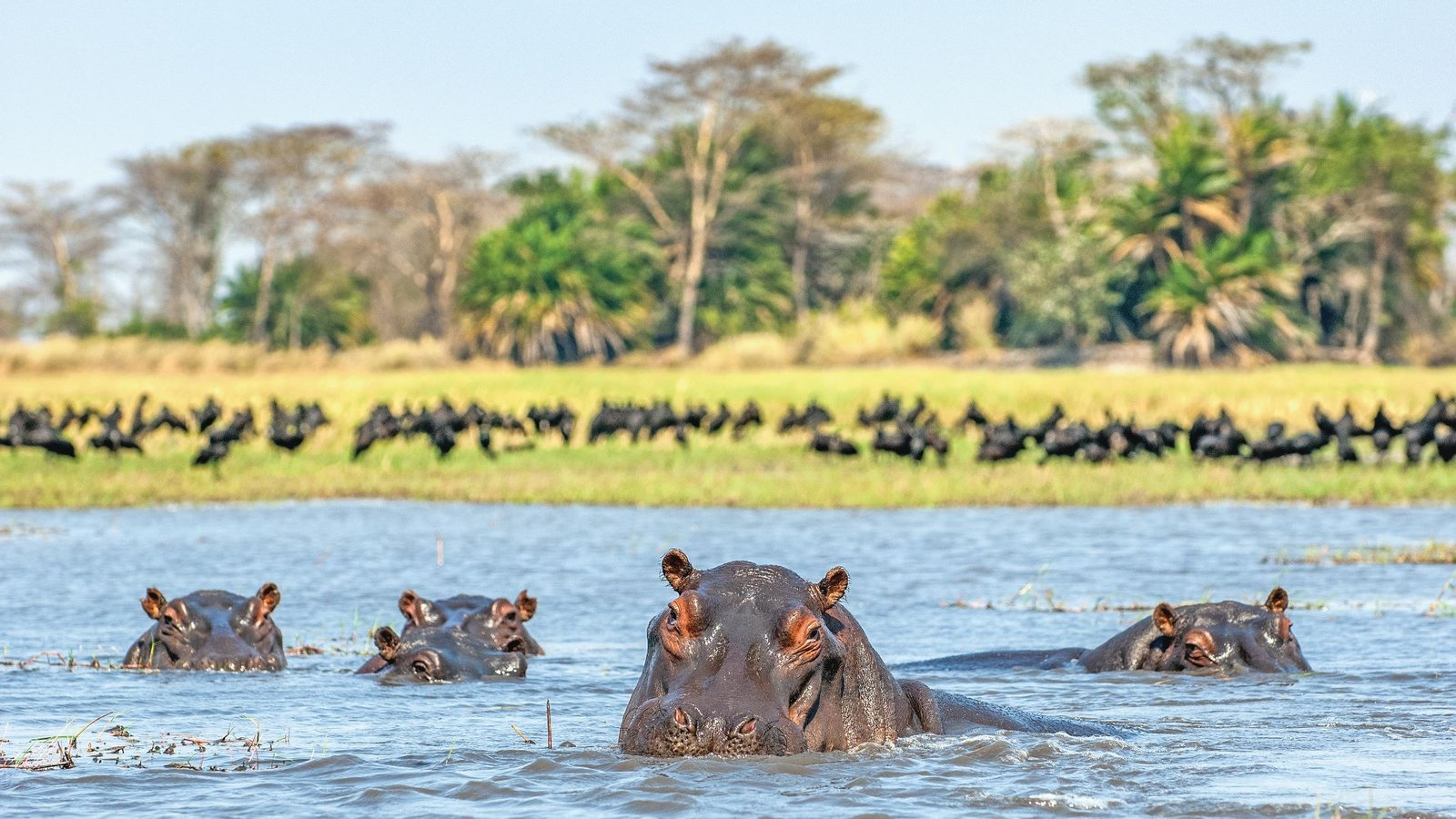 Safaris In Southern Africa
