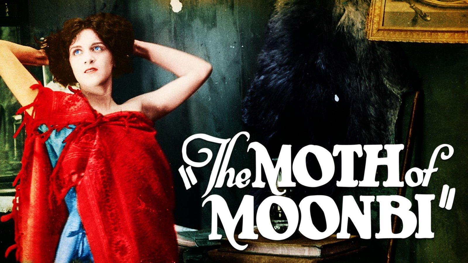 The Moth of Moonbi