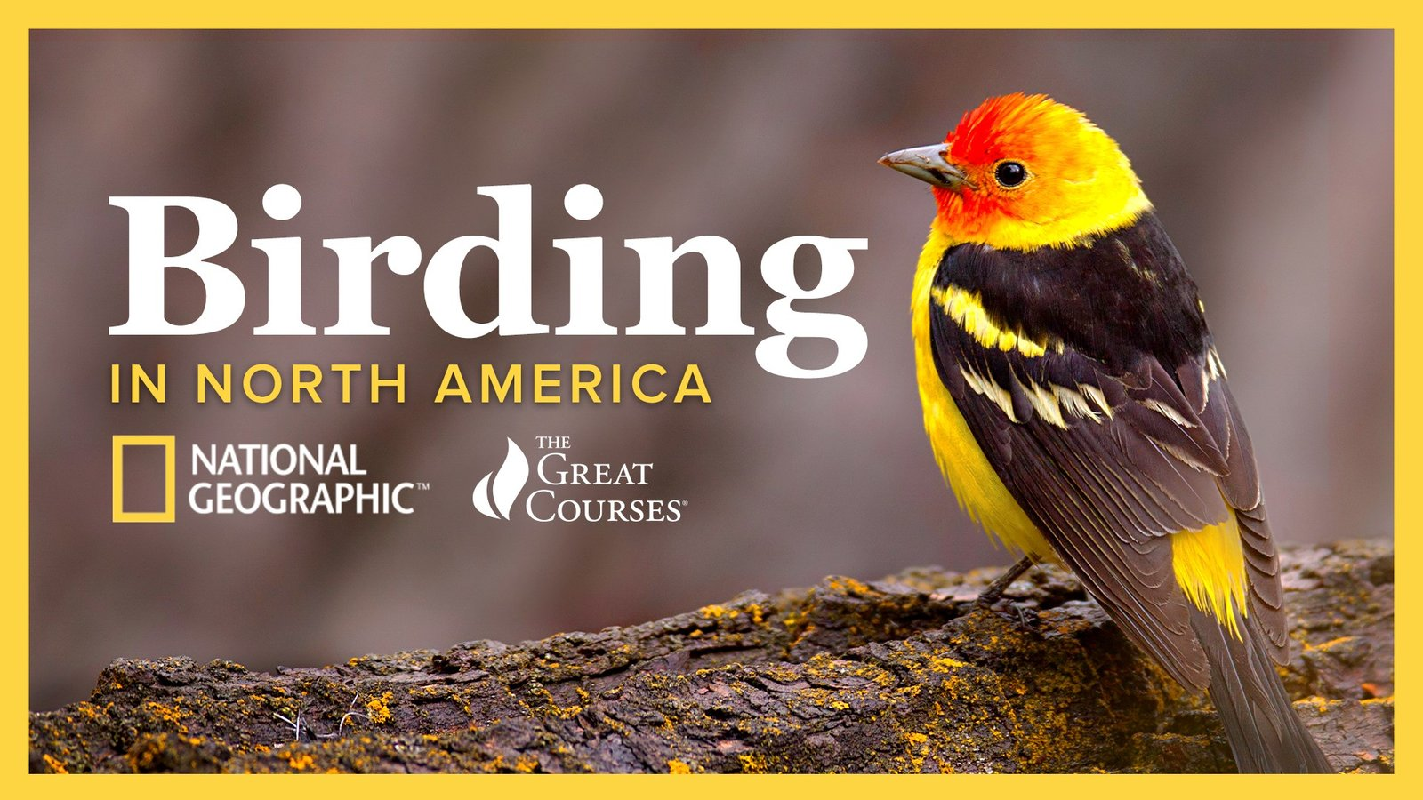 The National Geographic Guide to Birding in North America
